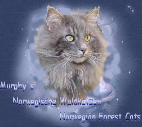 Murphy´s Norwegian Forest Cats